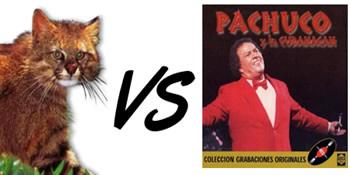 Colocolo vs Pachucho